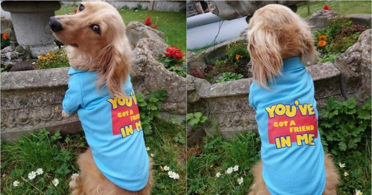 """Toy Story Style """"You've Got A Friend In Me"""" Dog Top £14 Delivered @ Etsy"""